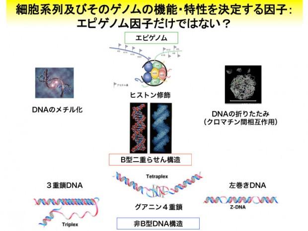 """""""ñBŒ^DNA.pptx"""