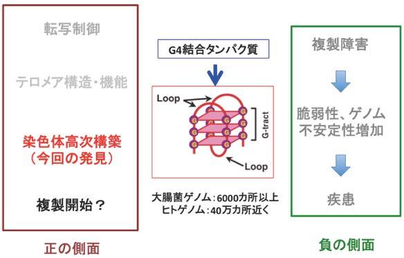 HPエッセイ複製タイミング図4