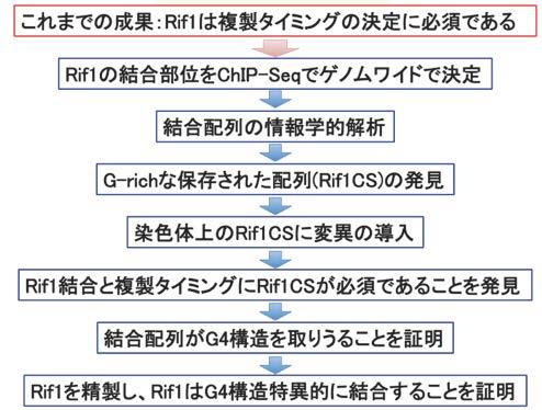 HPエッセイ複製タイミング図2